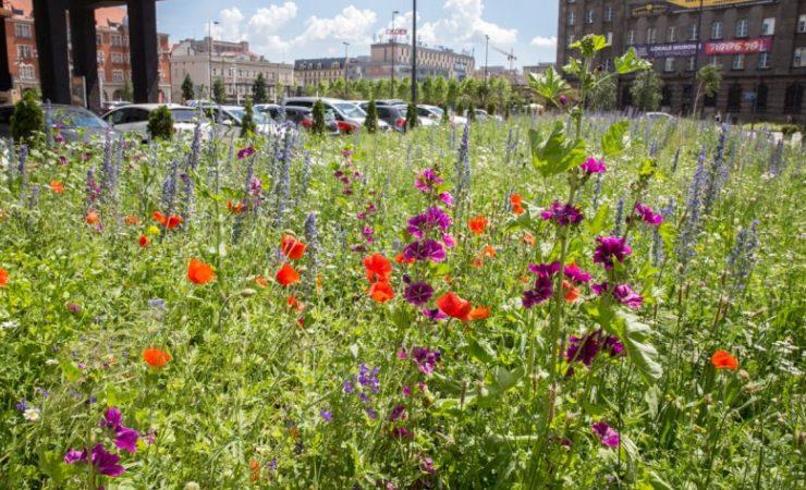Zielone inicjatywy w Katowicach – siejemy łąki i sadzimy drzewa